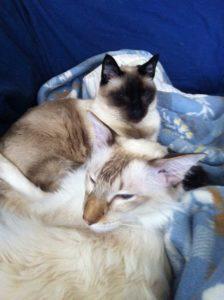 Djino und Sammy 2013
