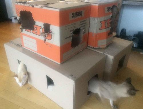 Womit sollen unsere Katzen spielen?