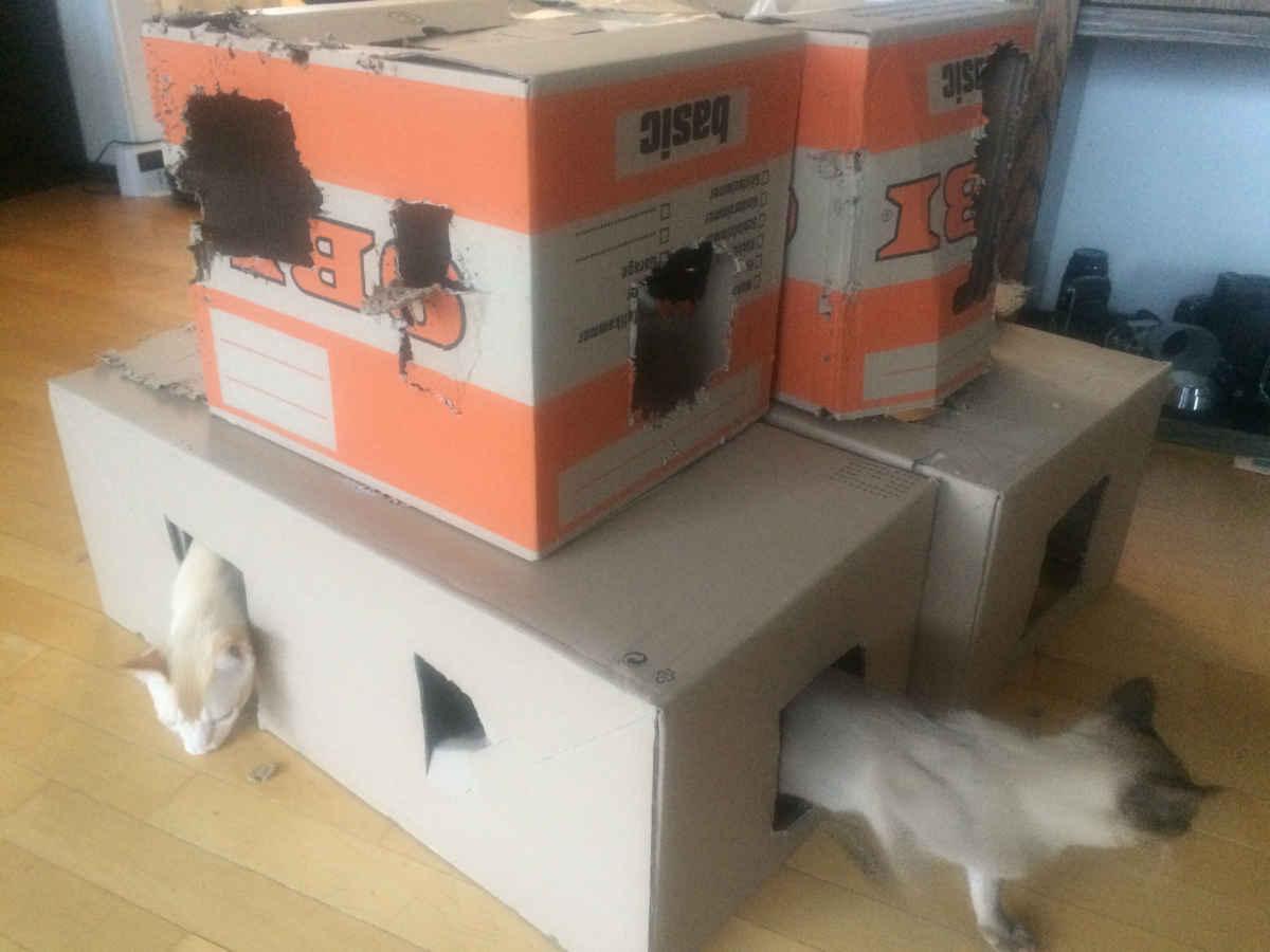 womit sollen unsere katzen spielen abenteuer katze. Black Bedroom Furniture Sets. Home Design Ideas