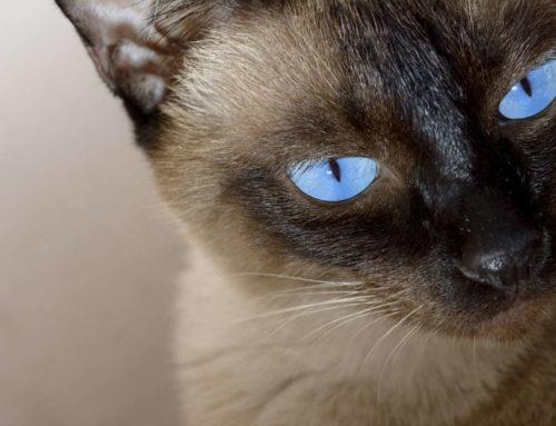 Wie unsere erste Katze ihren Todeszeitpunkt selbst bestimmte