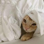 Rou unter der Decke