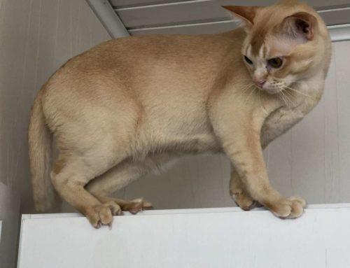 Wie unsere Katzen Wiedersehensfreude ausdrücken