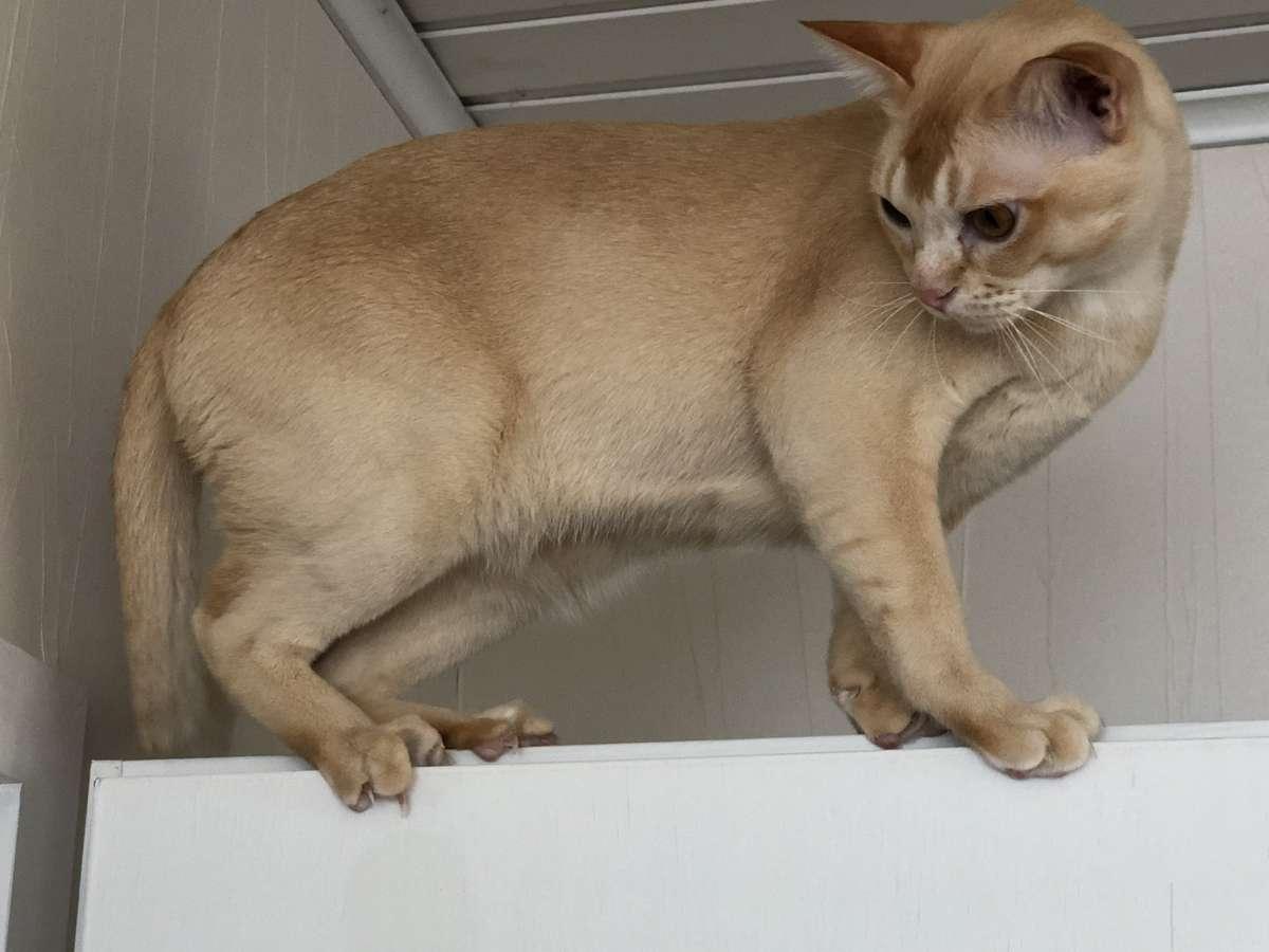 Katzen sind ebenso wie andere Tiere in der Lage, Gefühle zu zeigen.
