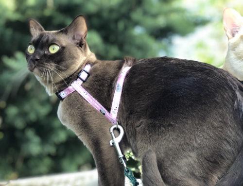 Giftige und ungiftige Pflanzen für Katzen