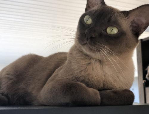 Horror – plötzlich Katzenallergie