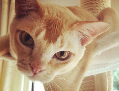 Wer ist intelligenter: Kater oder Katze?