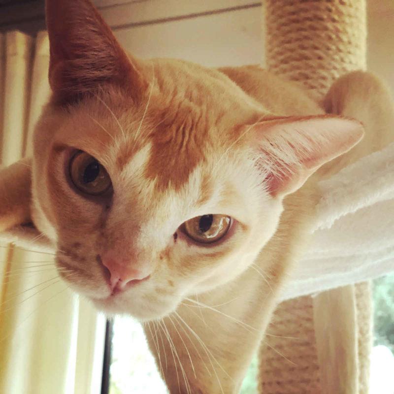 Wer ist intelligenter: Kater oder Katze? - Abenteuer Katze