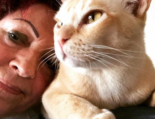 Die erogenen Zonen der Katzen