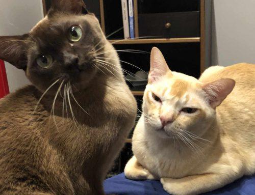 Eine Katzenweihnachtsgeschichte: Wie die Katzen hinter der Regenbogenbrücke zur Weihnachtsfreude beitrugen