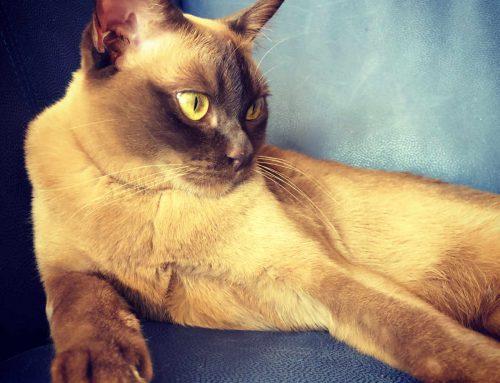 Einzelkatze oder Mehrkatzenhaushalt?