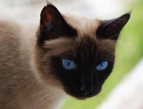 Die Katze, die weinte