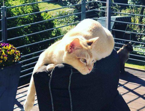 Auto fahren mit Katzen, der Horror