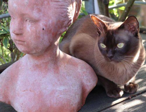 Ausgefallene Katzennamen Update vom 06.01.2021