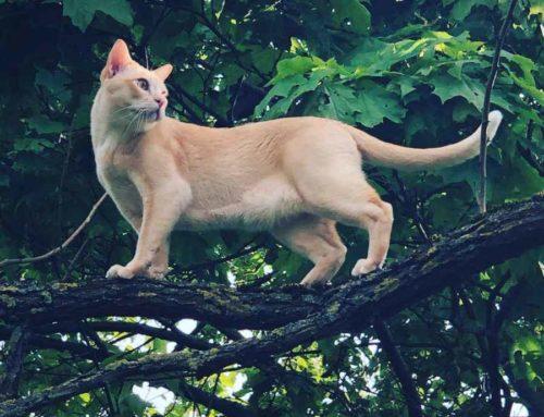Katzenterror – Das Recht der Katzen